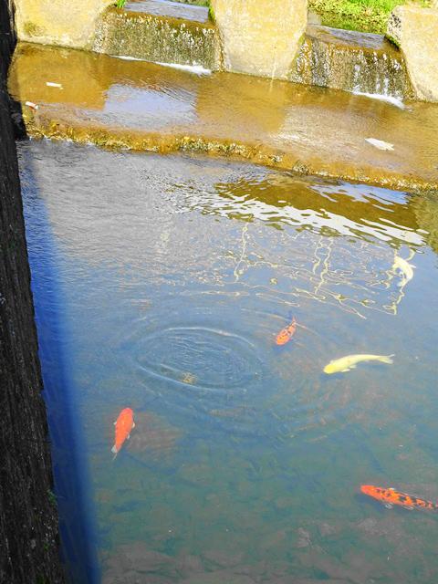 水ぬるむ久米隅田川