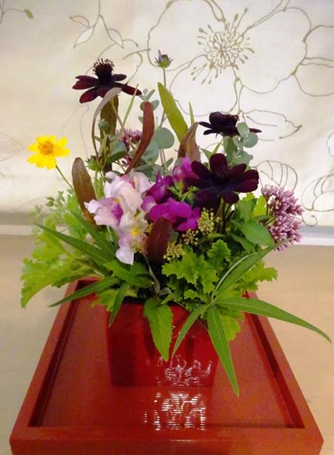 チョカモカと秋のお花たち