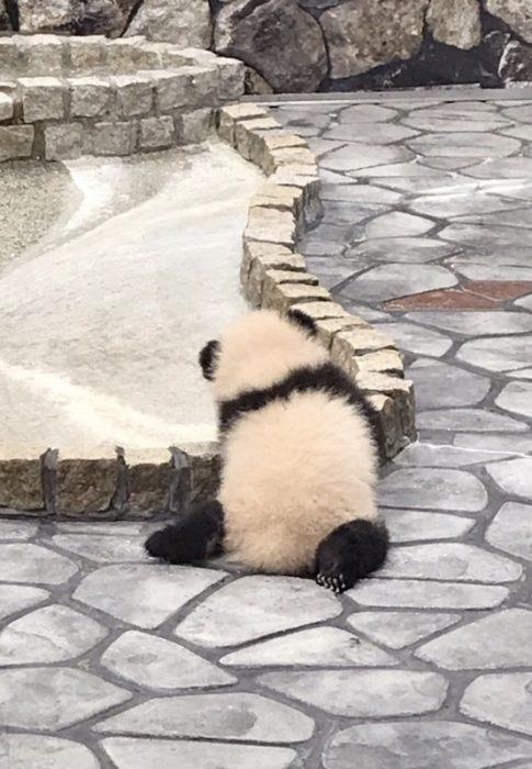 子パンダ、彩浜(さいひん)