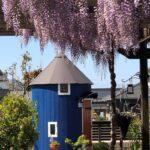 藤の花とムーミン小屋